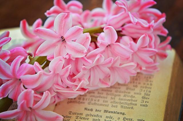 hyacinth-782334_640